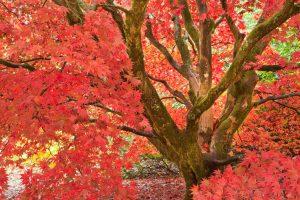 Fall Tree Colorfull