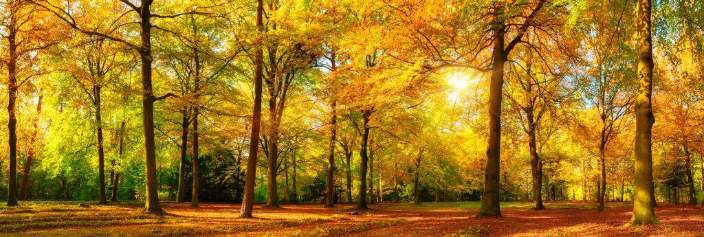 October Astrology Monthly Astrology Forecast